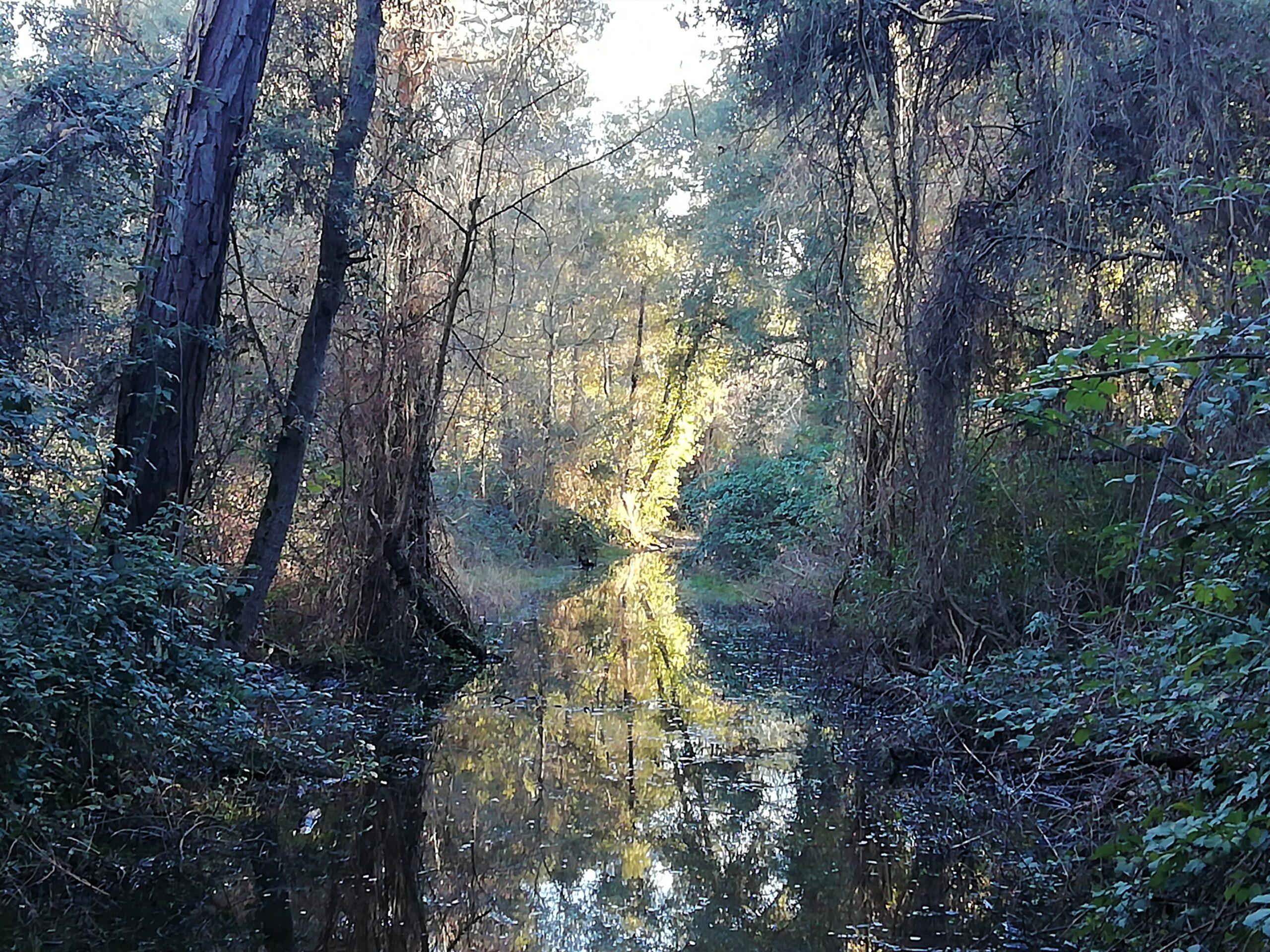 Escursione Macchia Lucchese | Naturatour